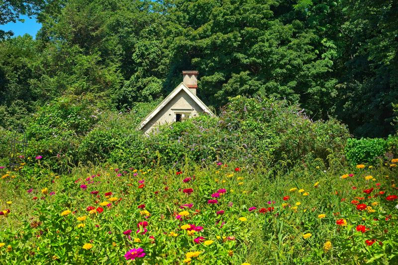 Flowers and tiny cottage. Bright flowers in a wild patch in front of a tiny cottage in upstate New York stock photo