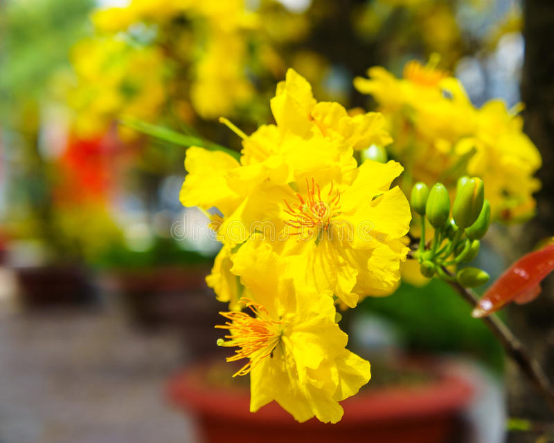 The Flowers Of Traditional Vietnamese New Year Stock Photo ...