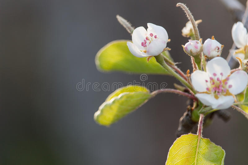 Flowers in the tree royalty free stock photography