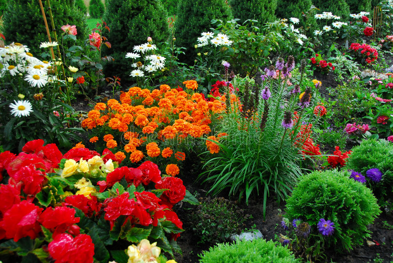 Flowers and trees in garden stock photo