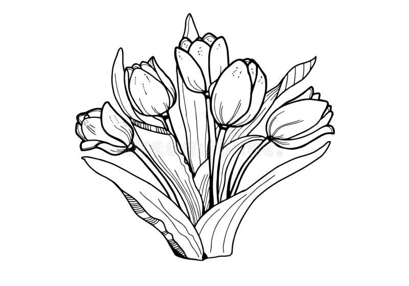 Flowers Tulips. Black and white image . Coloring for adults.   Line art drawig royalty free illustration
