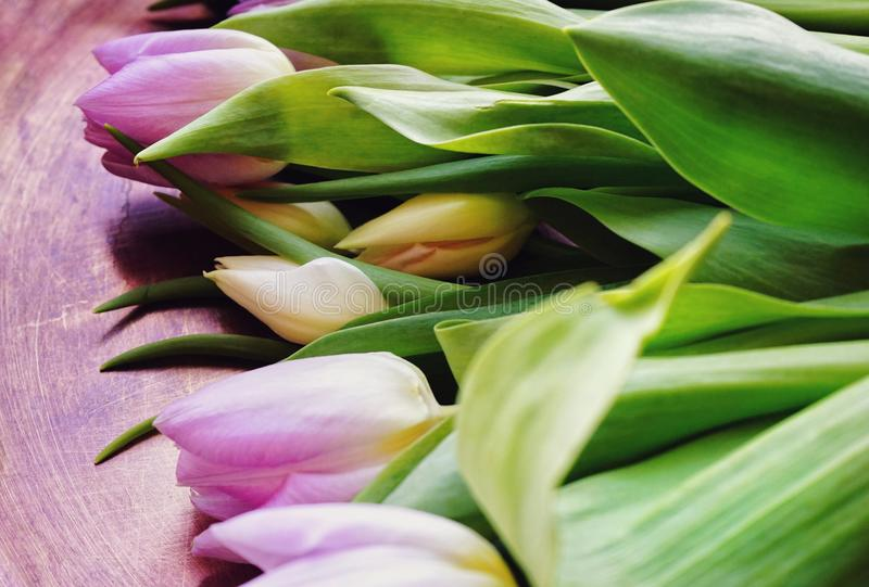 tulips flowers close-up spring day royalty free stock photo