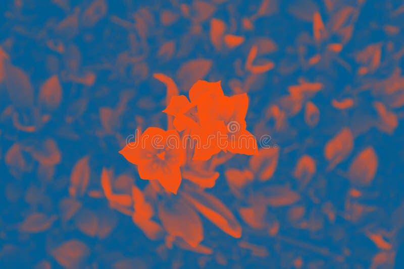 Flowers tulips. Classic blue and orange lush lava colors. Flowers tulips, floral, pattern. Classic blue and orange lush lava colors stock photos