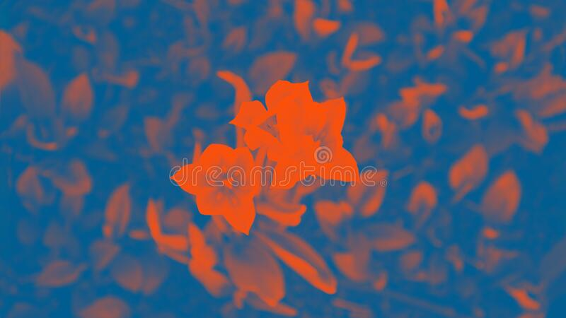 Flowers tulips. Classic blue and orange lush lava colors, 16:9 panoramic format. Flowers tulips, floral, pattern. Classic blue and orange lush lava colors, 16:9 stock photography