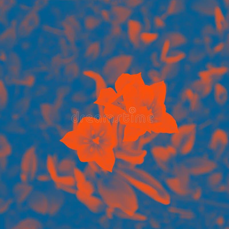 Flowers tulips. Classic blue and orange lush lava colors. Flowers tulips, floral, pattern. Classic blue and orange lush lava colors royalty free stock photo