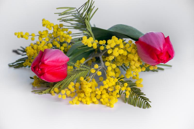 Flowers tulips and Mimosa. Two red tulips and a branch of Mimosa on a light gray background. Spring bouquet stock photos