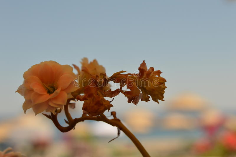 Flowers Of Turkey stock photos