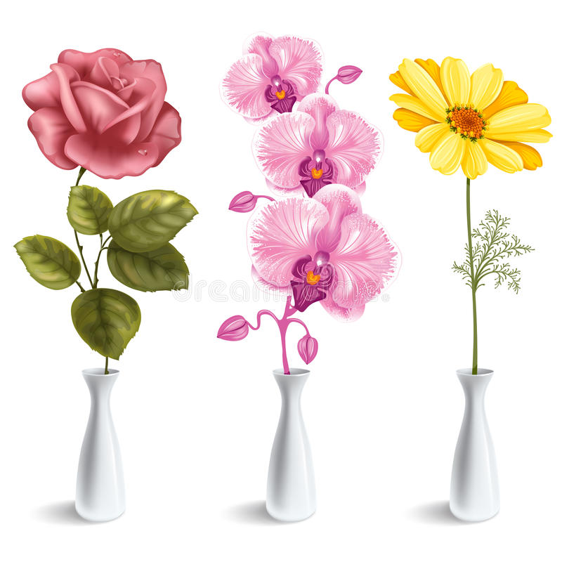 Flowers in vase. Set of beautiful flowers (rose, orchid, daisy) in the vase. on white background stock illustration