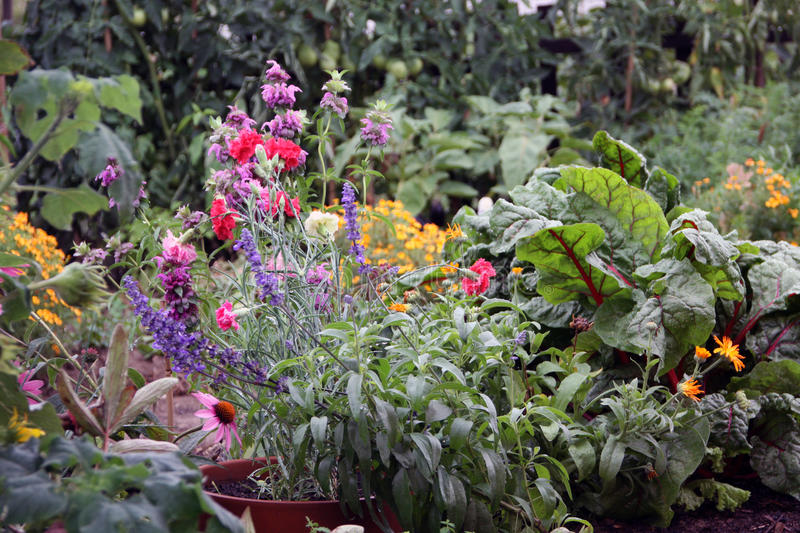 Download Flowers And Vegetable Garden Bed Stock Photo - Image of green, stuff: 22543466