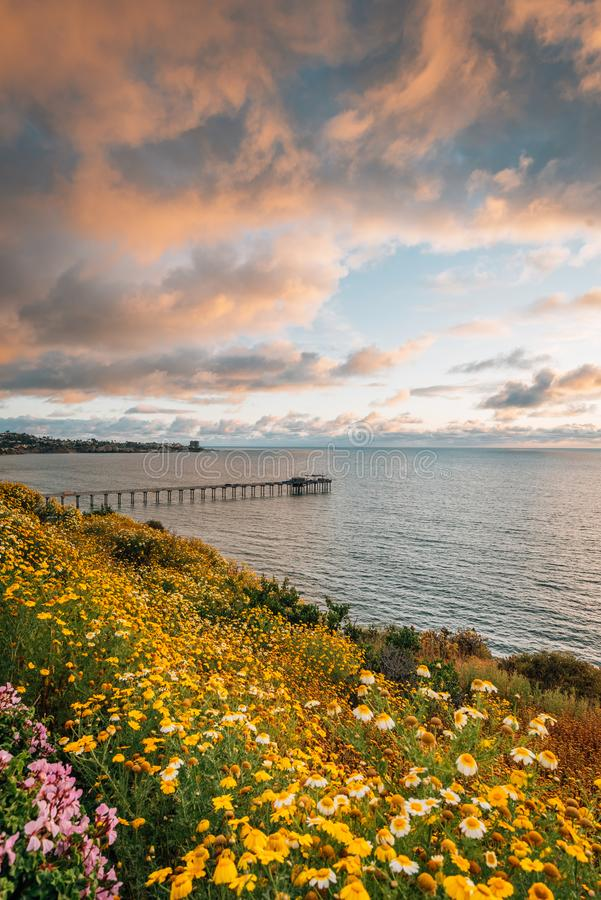 Flowers and view of Scripps Pier at sunset  in La Jolla, San Diego, California stock photos