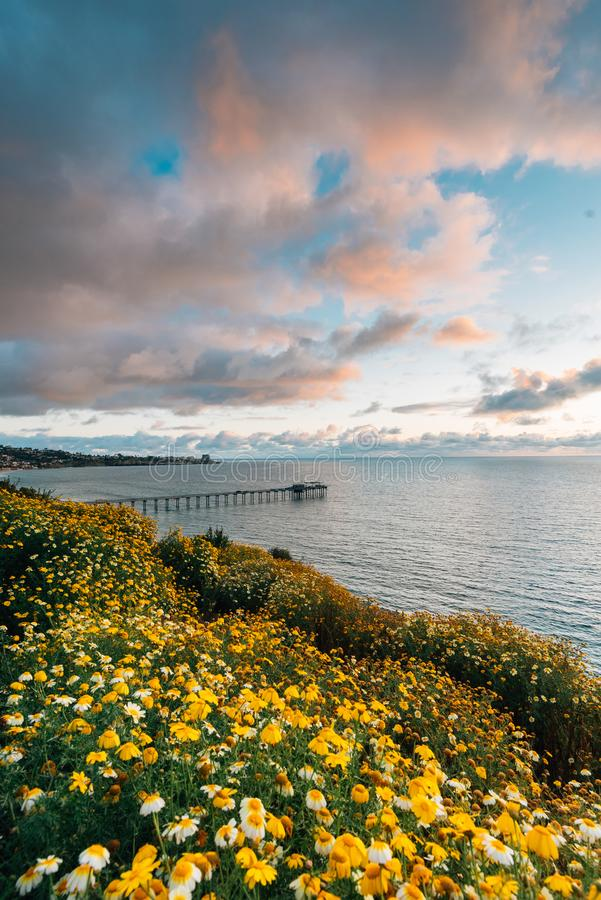 Flowers and view of Scripps Pier at sunset  in La Jolla, San Diego, California stock photography