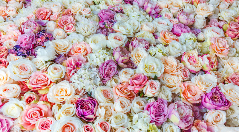 Flowers wall background with amazing red and white roses, Wedding decoration,. Hand made royalty free stock images
