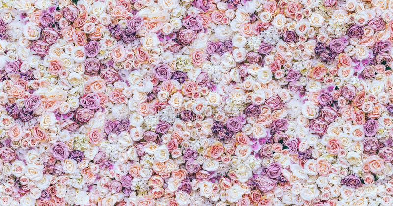 Flowers wall background with amazing red and white roses, Wedding decoration, hand made. Toning royalty free stock photos