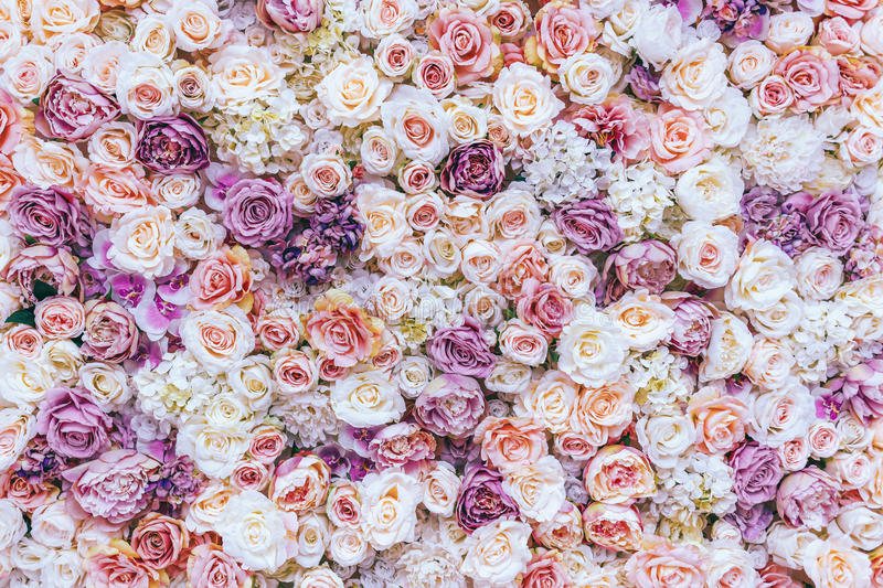 Flowers wall background with amazing red and white roses, Wedding decoration,. Hand made. Toning royalty free stock photography
