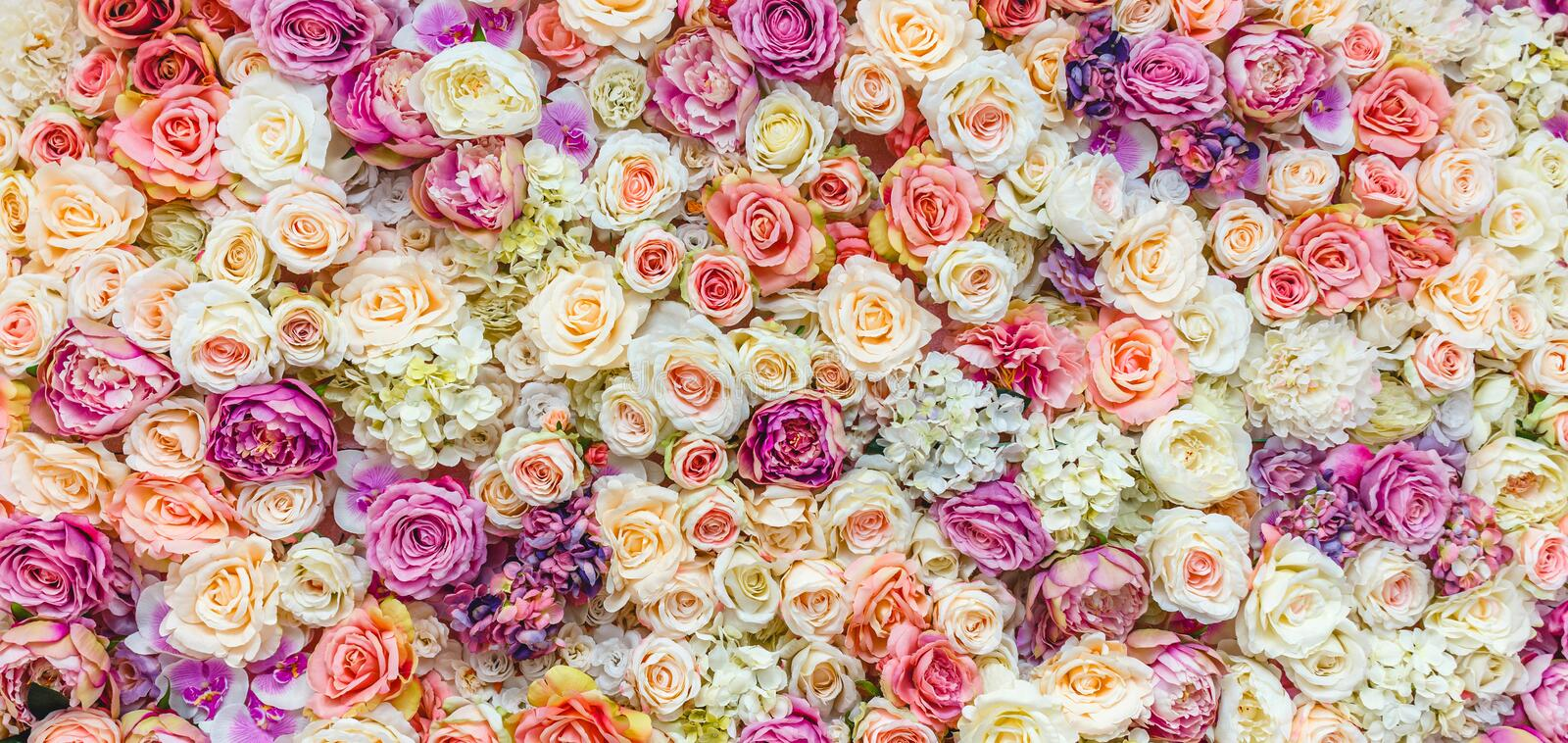 Flowers wall background with amazing red and white roses, Wedding decoration, hand made. Toning stock photography