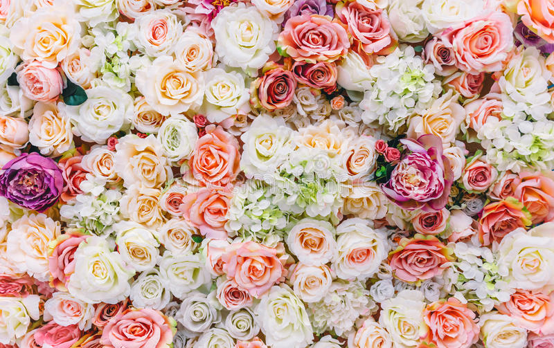 Flowers wall background with amazing red and white roses, Wedding decoration, hand made. Toning royalty free stock images