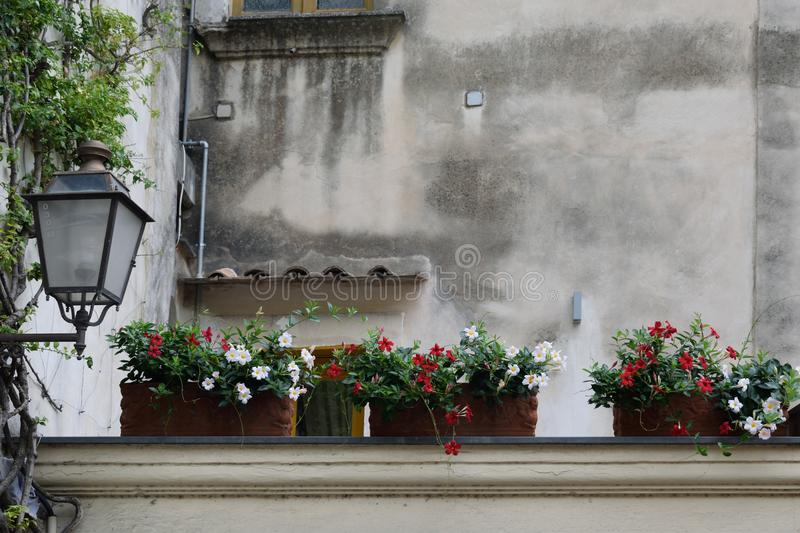 Flowers on wall at Positano. A selection of flowers in pots on top of a wall in Positano, Italy royalty free stock photography