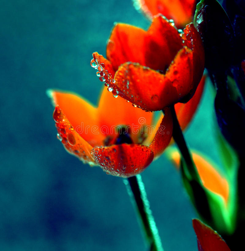Flowers with water drops. Under light stock image