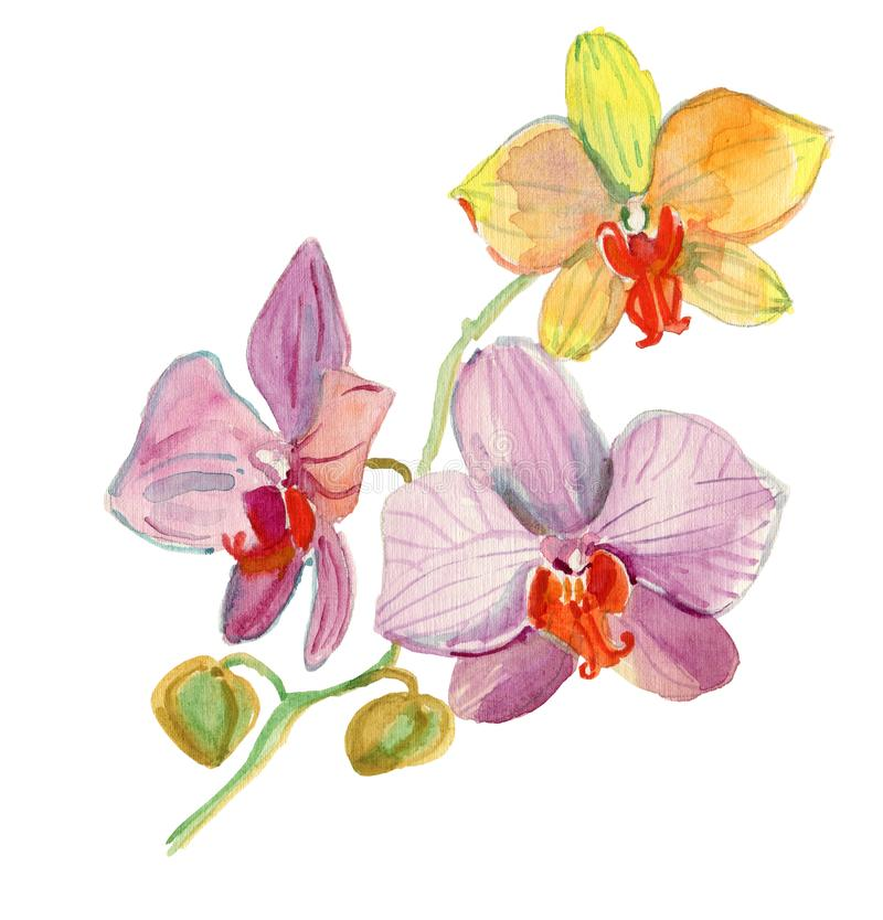 Watercolor card with beautiful flowers. Flowers watercolor illustration. Floral composition. stock illustration