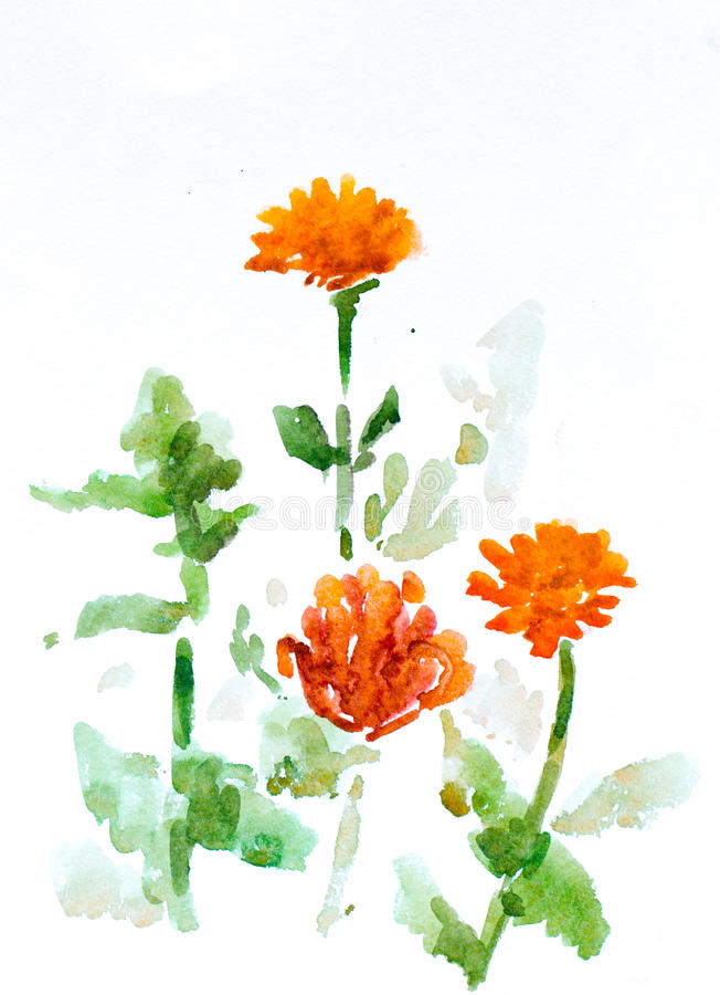 Flowers, watercolor painting royalty free stock images