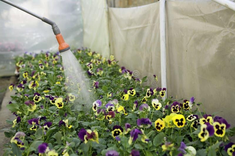 Flowers watering stock image