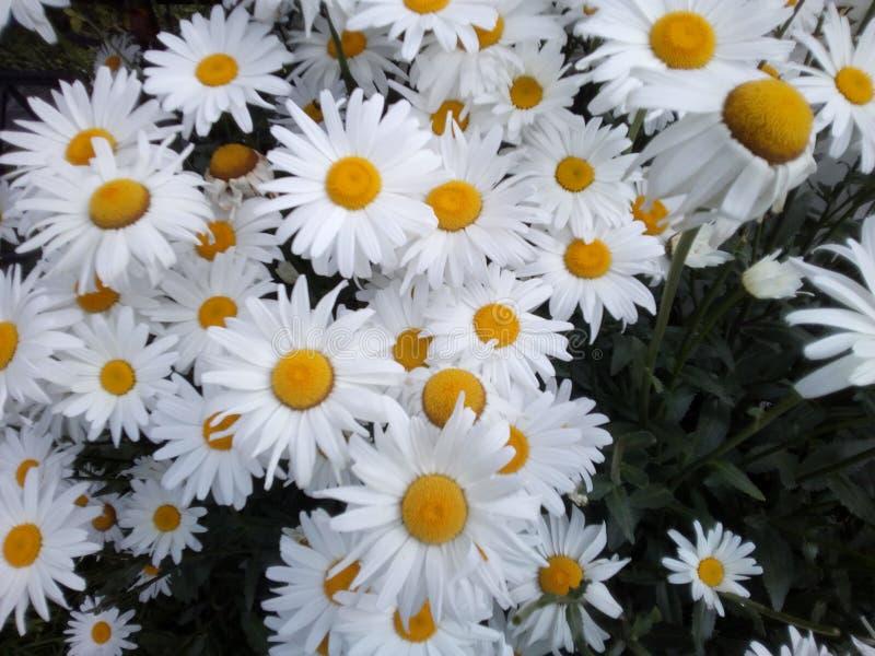 Flowers white stock photos