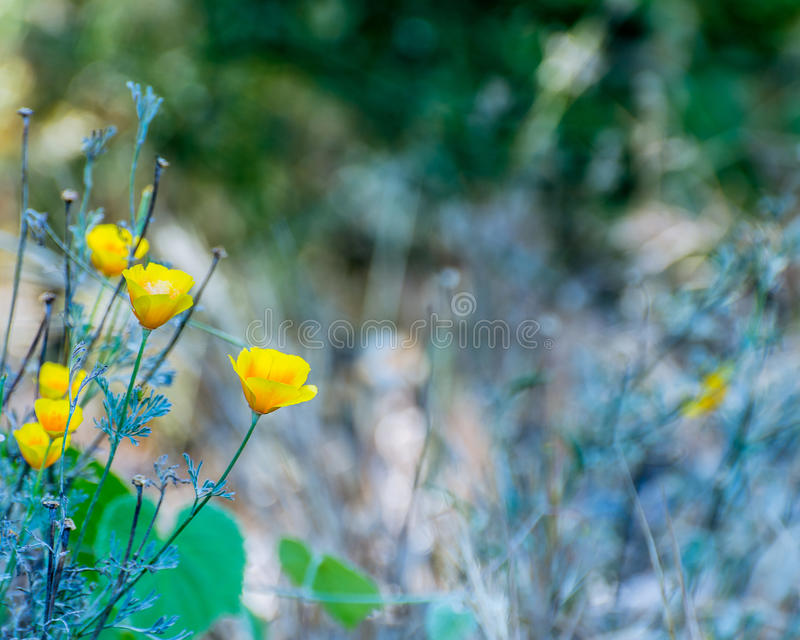 flowers in the wild royalty free stock image