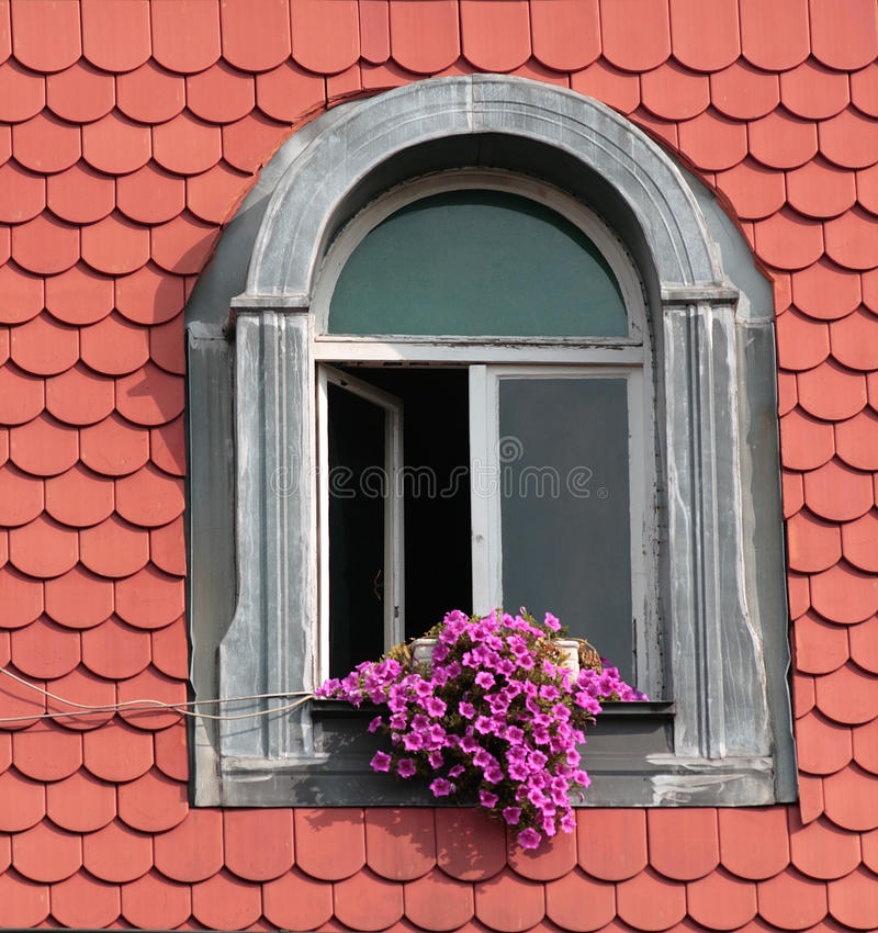 Flowers on the window. Violet flowers on the old window in metal frame royalty free stock photography