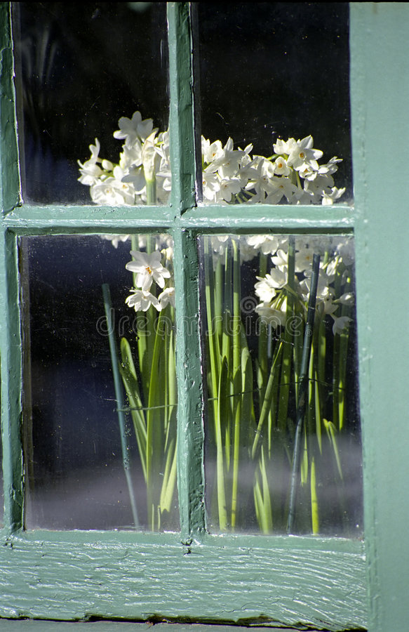 Flowers in the Window stock image