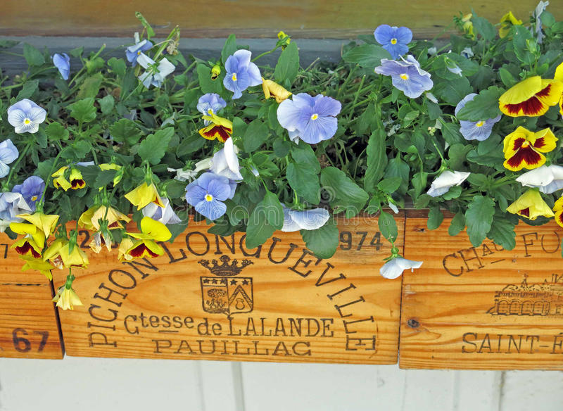 Flowers in window box with French writing Viola. Window box with violas or violets stock photography