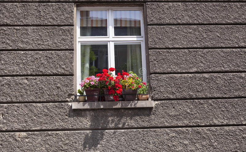 Flowers on the window stock photo