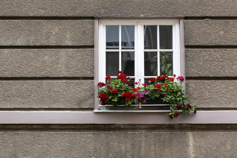 Flowers on the window royalty free stock image
