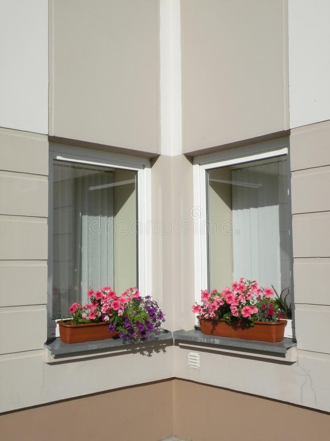 Download Flowers Windows Royalty Free Stock Photo - Image: 15583155