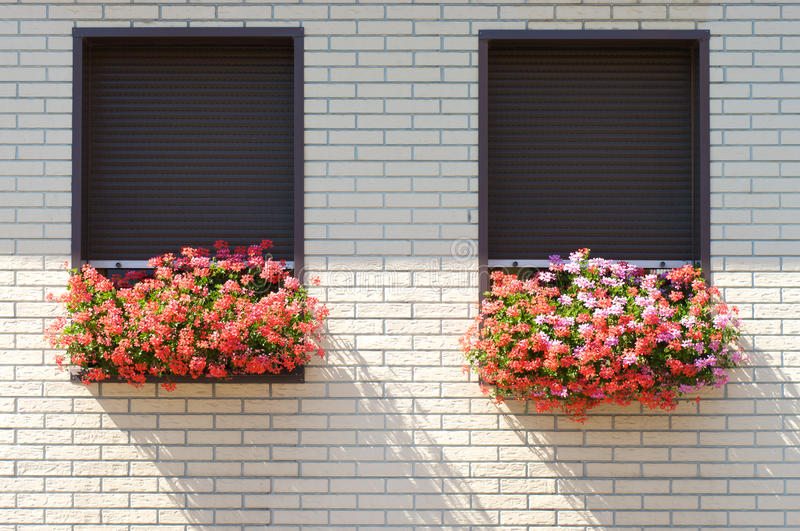 Download Flowers on the windowsill. stock image. Image of frame - 20121073