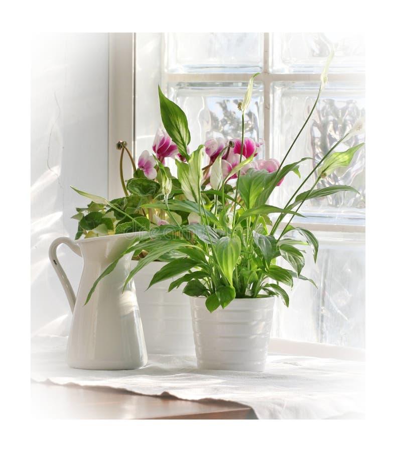 Download Flowers on windowsill stock image. Image of windowsill - 26617659