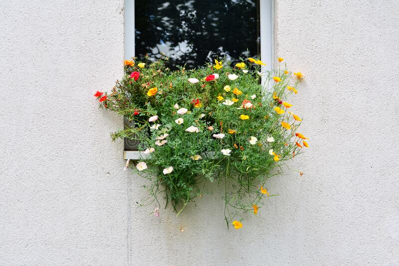 Flowers in windowsill of an exterior wall royalty free stock image
