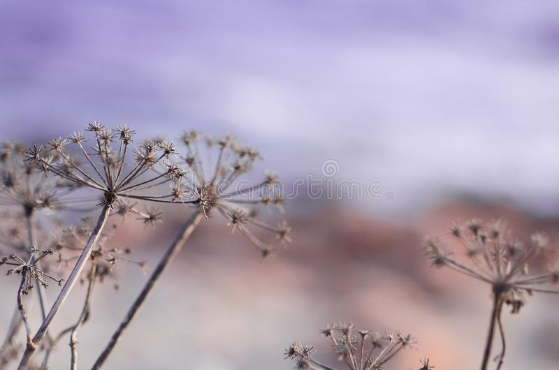 Flowers in winter macro detail. With purple background stock image