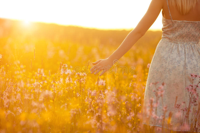 Flowers and the woman palm in the field. Lit evening sun royalty free stock images