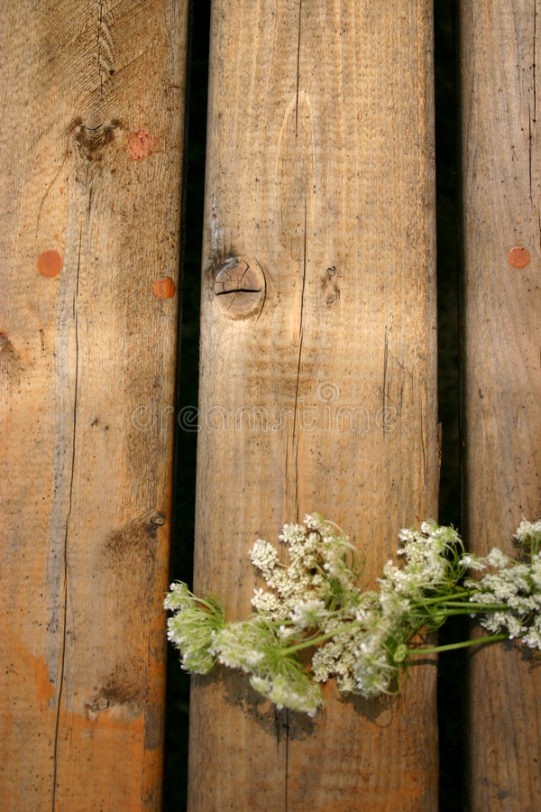 Download Flowers On Wood Royalty Free Stock Photo - Image: 187735