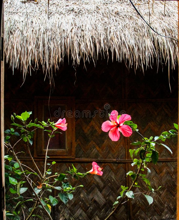 flowers on wooden background as a hut stock photo