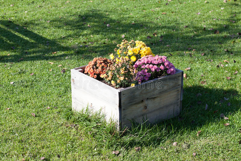 Flowers in a wooden box stock photo