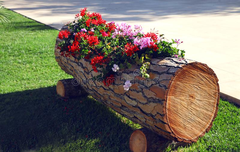 flowers in a wooden ornamental box at street royalty free stock photo