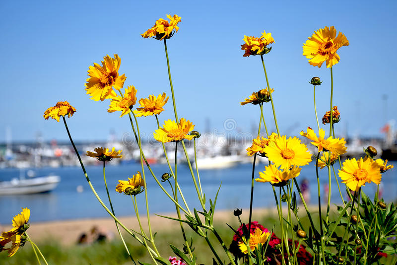 Flowers and yachts at the background royalty free stock images