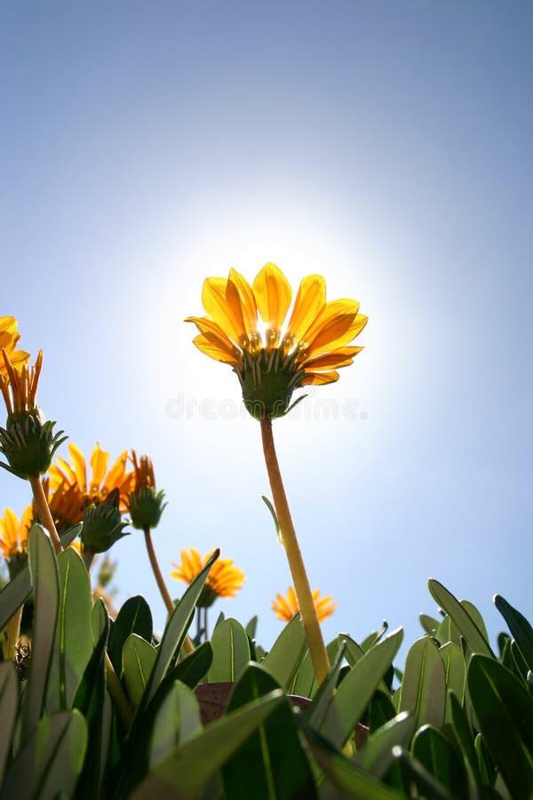 flowers yellow στοκ φωτογραφία με δικαίωμα ελεύθερης χρήσης