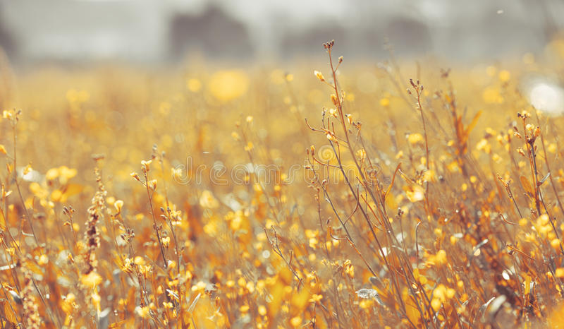 Download Flowers stock image. Image of yellow, spring, sunlight - 32547795