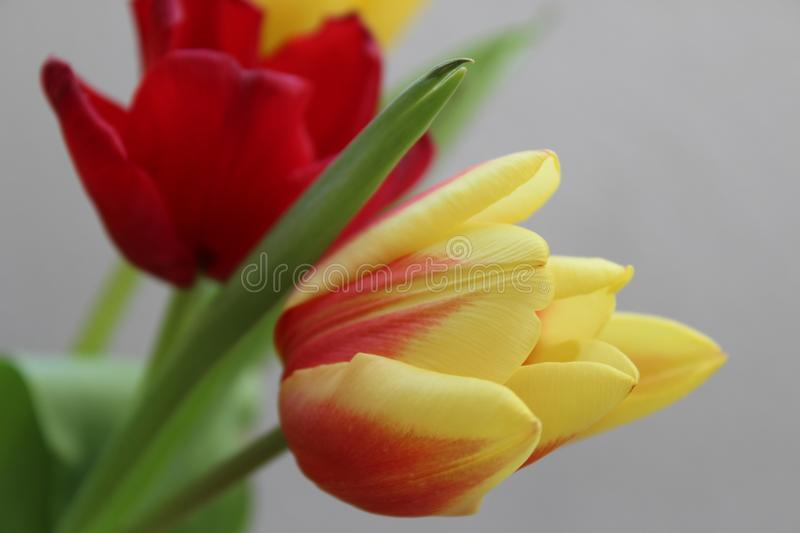 Flowers in yellow with red stock image