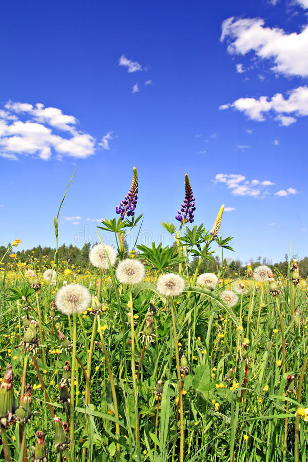 Flowerses auf Feld lizenzfreies stockbild