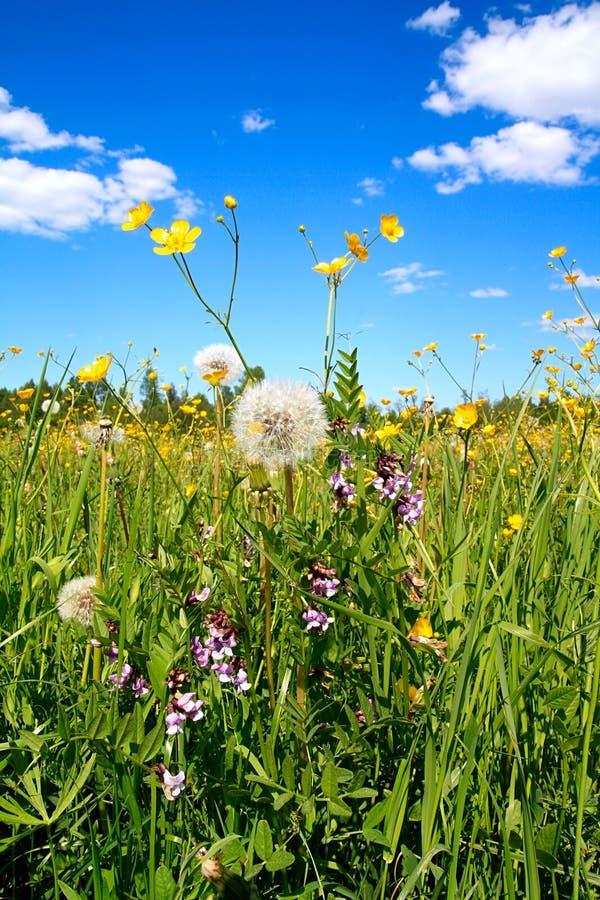 Flowerses auf Feld lizenzfreie stockbilder