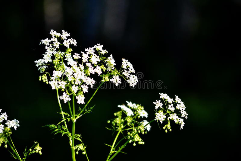 Flowerses de bois de construction photo stock