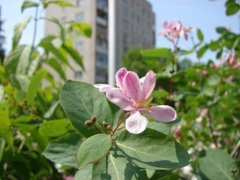 Flowerses de ville images stock